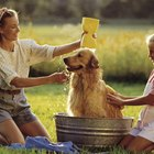 How to Bathe My Dog After Applying Frontline Plus