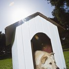 How to Persuade a Dog to Use a Doghouse
