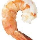Quanto tempo leva para o camarão atingir um tamanho comestível