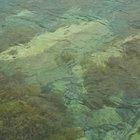 Tipos y características de las algas pardas