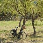 Cómo enderezar un árbol inclinado