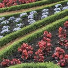 Boxwood hedges outline flowerbeds and enhance the flowers inside.