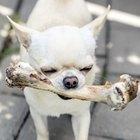 Los 10 mejores alimentos para perros