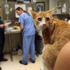 Neutered Cat Surgery Recovery & Cat Litter