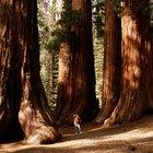 El Sequoia National Forest y los campamentos cerca de las cascadas
