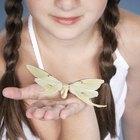 Cómo hacer una trenza mariposa