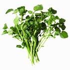 Lista de plantas acuáticas comestibles