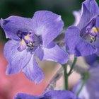 A diferença entre roxo e violeta