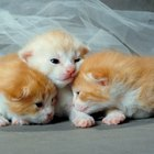 What to Use to Clean Newborn Kittens