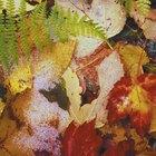 Como fazer frotagem de folhas