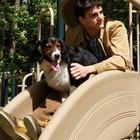 Como fazer um playground para cães