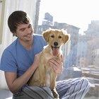 Como evitar que os cães fiquem pulando na janela?