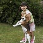 Back Pain in Beagles