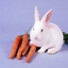 Como fazer um bebedouro para coelhos
