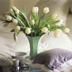 Cómo cuidar tulipanes en casa cuando ya han florecido