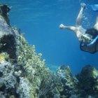 Dónde hacer snorkel en Florida