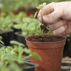 5 elementos necesarios para el cultivo de plantas