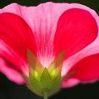 El sistema reproductor de las plantas con flores