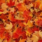 Cómo secar las hojas rápidamente
