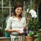 ¿Qué tipo de fertilizante amará tu orquídea y cuándo y con qué frecuencia debes aplicarlo?