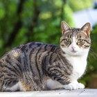 Cómo impedir que vengan gatos a marcar territorio en un jardín