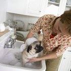 Tratamiento para pulgas con jabón para lavar platos y vinagre