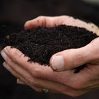 How Is Compost Made?