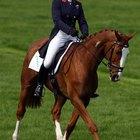 Como saber o tamanho certo da barrigueira da sela para cavalos