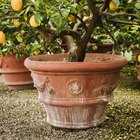 Plant Food for Fruit Trees