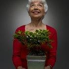 Plantas de interior que viven para siempre