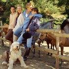 Os efeitos de dar vermífugos de cavalo ao seu cachorro