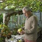Cómo preparar jalea de manzana a la antigua