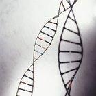 Qual é a função do tampão tris na extração de DNA?