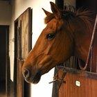 Medicamento para verrugas em cavalos