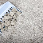 How to Choose a Kitty Litter