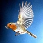 Como acalmar um pássaro