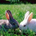 Como cuidar de um coelho órfão