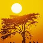 Costumbres africanas antiguas