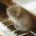 How Does Music Affect a Kitten?