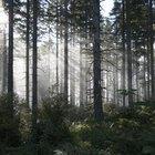 Vantagens e desvantagens da silvicultura