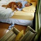 Como fazer com que seu cachorro pare de acordar cedo