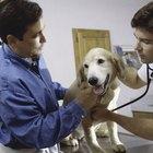 Quais são as causas da fraqueza nas pernas traseiras em cães?