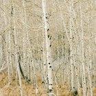 Herramientas para tala de árboles