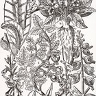 Jobs for Botanical Illustrators
