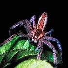 Hazlo tú mismo: trampas para arañas