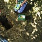 Como enterrar um animal de estimação no quintal