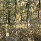 Excessive underbrush in wooded areas increases wildfire risk.