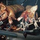 Cómo hacer un asador para cerdo