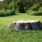 Cómo ayudar a que se pudra un tronco