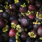 How to Grow a Mangosteen in a Container